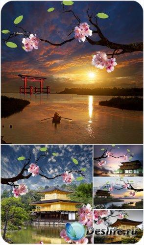 Восточные пейзажи, сакура - сток фото