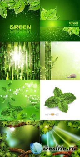 Векторные эко бэкграунды с бамбуком, мятой и зелеными листьями