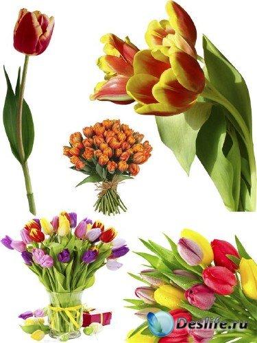 Тюльпаны (мега подборка цветов)