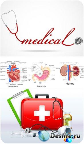 Медицина в векторе, анатомия