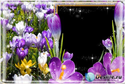 Рамка для фото –  Весенние крокусы