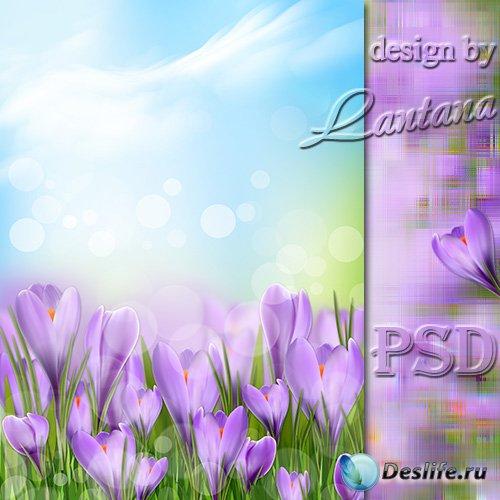 PSD исходник - Нежно-лиловый, застенчивый крокус