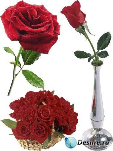 Красная Роза (мега подборка цветов)