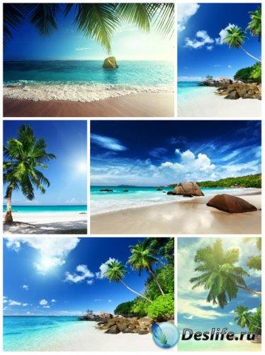 Морские пейзажи, море, пальмы - сток фото