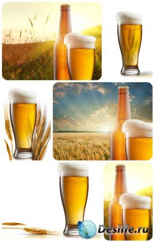 Пиво на фоне пшеничного поля - сток фото