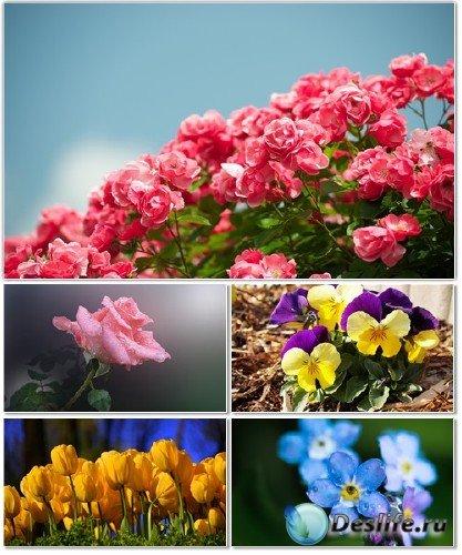 Красочные фото разных видов цветов на рабочий стол. Часть 1
