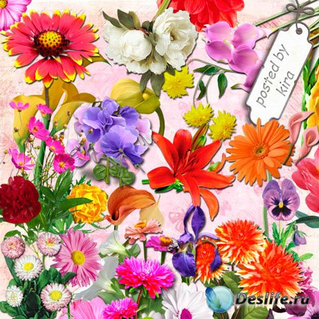 Клипарт в png   - Каллы, пионы, георгины, анютины глазки и другие садовые ц ...