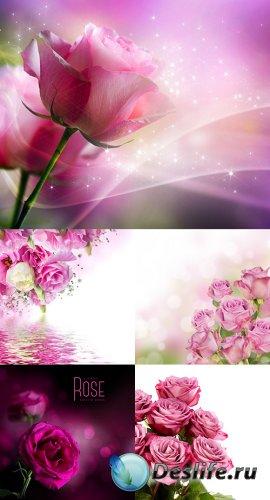 Растровый клипарт - Розовые розы