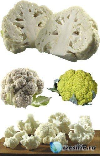 Овощи: капуста цветная (подборка клипарта)