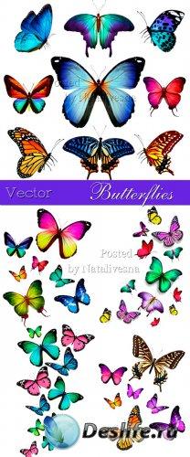 Махровые  бабочки на белом фоне