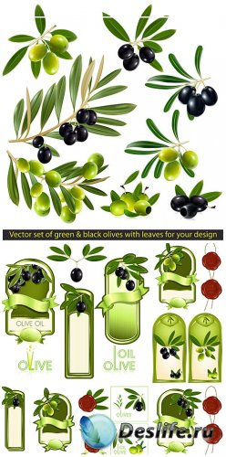 Оливки, этикетки в векторе / Olives, labels vector