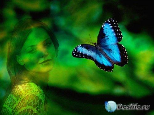 Рамка для фото - Красивая бабочка