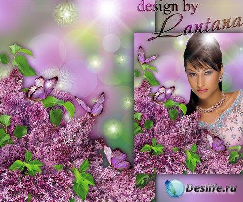PSD исходник - Сирень и бабочки