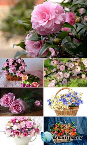 Обои для рабочего стола красивые цветы (Часть 9)