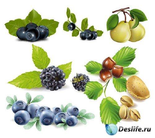 Несколько фруктов в векторном варианте