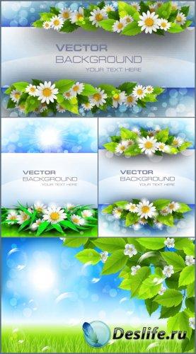 Летние фоны с ромашками в векторе
