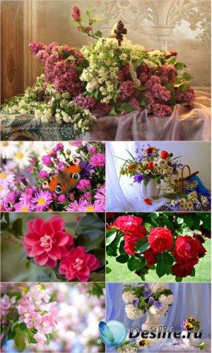 Обои для рабочего стола красивые цветы (Часть 10)