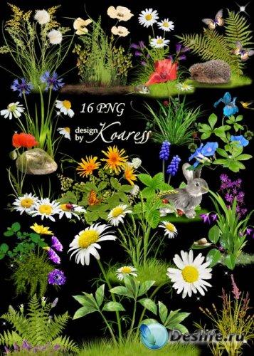 Цветочные кластеры с полевыми цветами на прозрачном фоне - Цветочная поляна ...