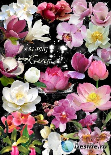 Png клипарт для дизайна с экзотическими цветами - Лотосы, водяные лилии, ор ...