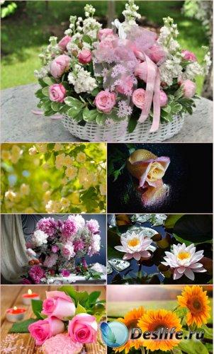 Обои для рабочего стола красивые цветы (Часть 12)