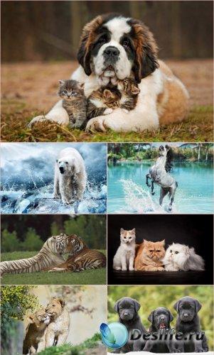 Обои для рабочего стола Животный Мир (Часть 7)