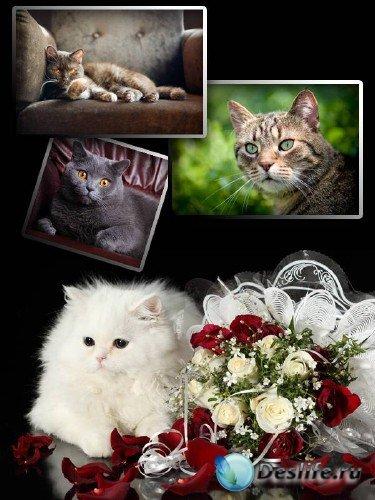 Прелестные Кошки и Коты (подборка изображений)