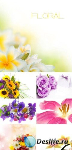 Цветочные поздравления