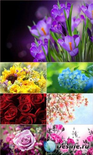 Обои для рабочего стола красивые цветы (Часть 15)