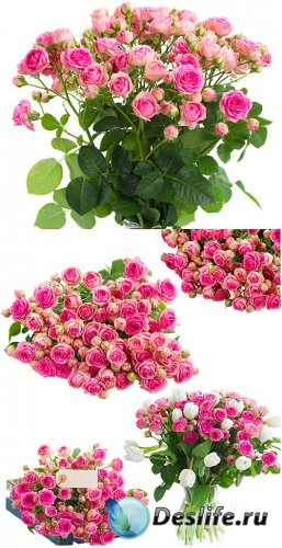 Розы, букеты цветов / Roses, bouquets of flowers - Stock Photo