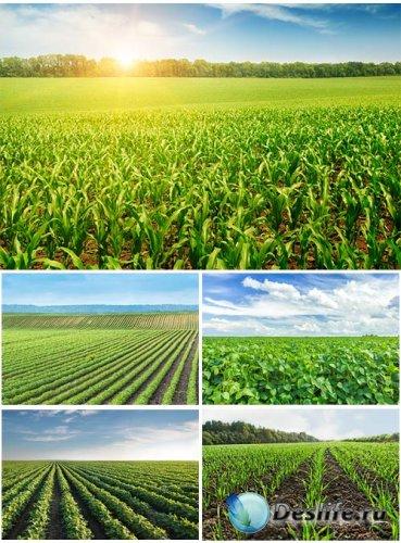 Красивые зеленые поля - клипарт