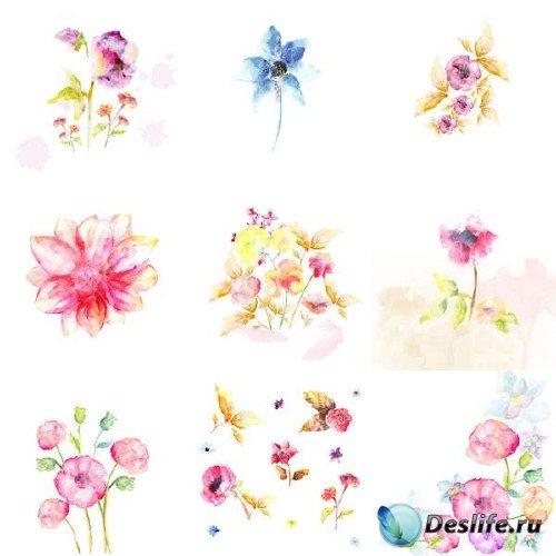 Акварельные рисунки с цветами в векторном формате
