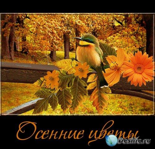 Осенние цветы - клипарт на прозрачном фоне