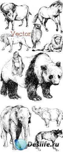 Подборка рисованного клипарта в Векторе – Животный мир