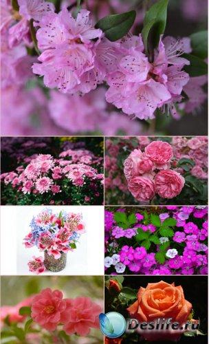 Обои для рабочего стола красивые цветы (Часть 16)