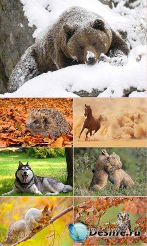 Обои для рабочего стола Животный Мир (Часть 8)