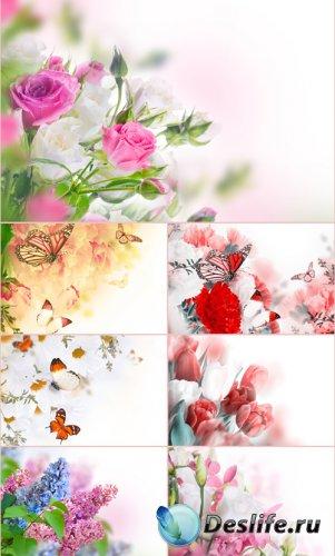 Стоковые фотографии - Красивые цветы