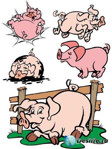 Свинья и хряк (векторные отрисовки)