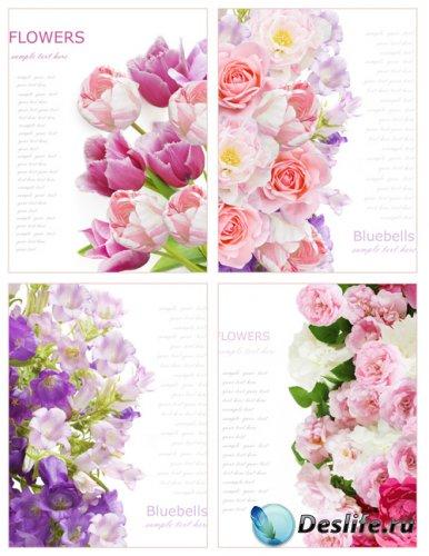 Стоковые фотографии - Красивые цветы (Часть 2)