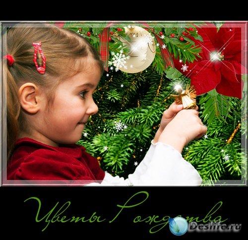 Цветы Рождества - рождественский декор на прозрачном фоне