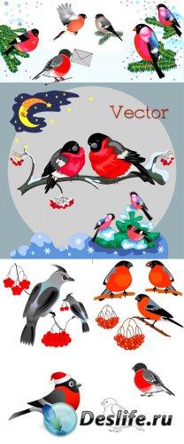 Подборка векторного клипарта – Снегири яркие птички