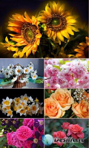 Обои для рабочего стола красивые цветы. Часть 18