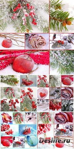 Winter collage, viburnum, tree branches, red rose - stock photos