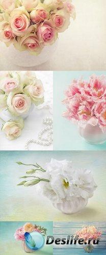 Растровый клипарт - Цветы 2