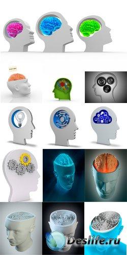 3d голова и головной мозг - растровый клипарт