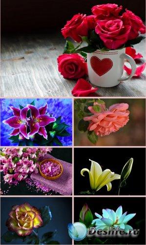 Обои для рабочего стола красивые цветы. Часть 21