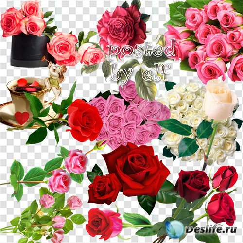Клипарт без фона - Почему так сладко пахнут розы