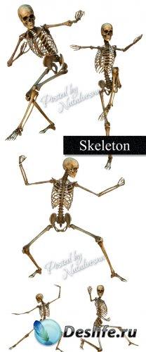 Скелеты в движении на белом фоне