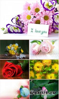 Обои для рабочего стола красивые цветы. Часть 22