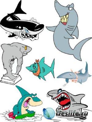 Акула (морские обитатели) подборка векторных отрисовок