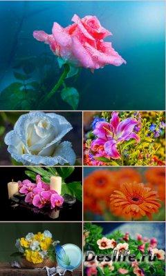 Обои для рабочего стола красивые цветы. Часть 23